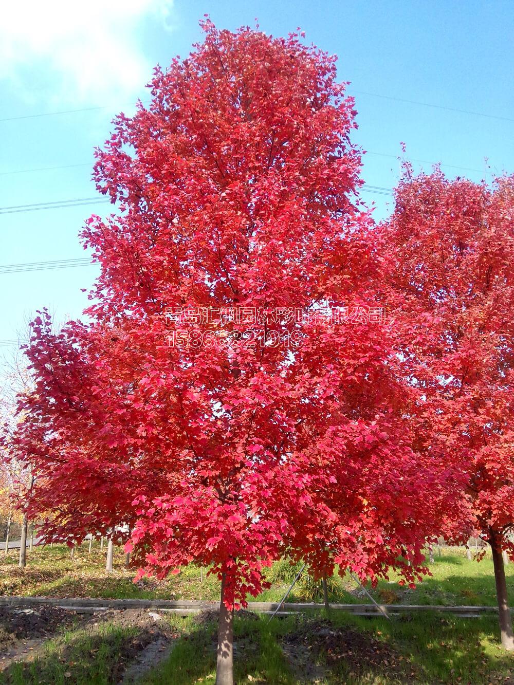 秋季十月的风景图片