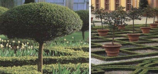 修剪直干球型灌木